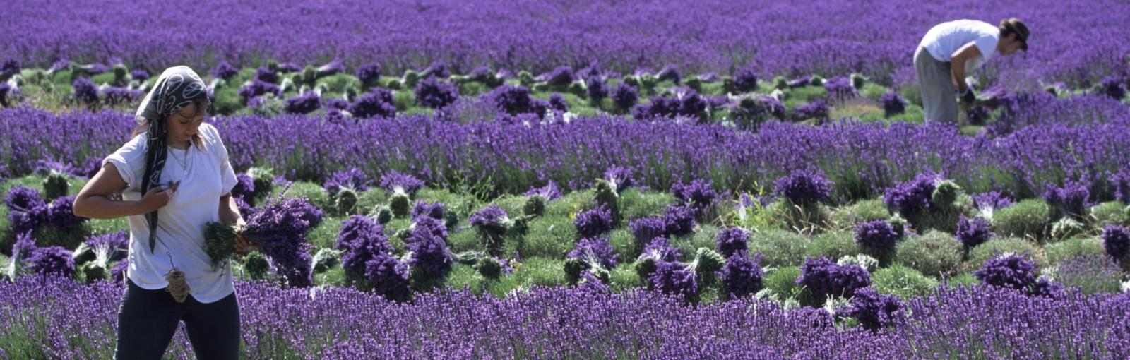 Tours Provence - Journées complètes - Tours au départ de Paris
