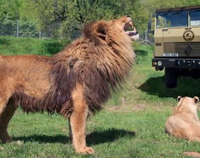 Camion safari